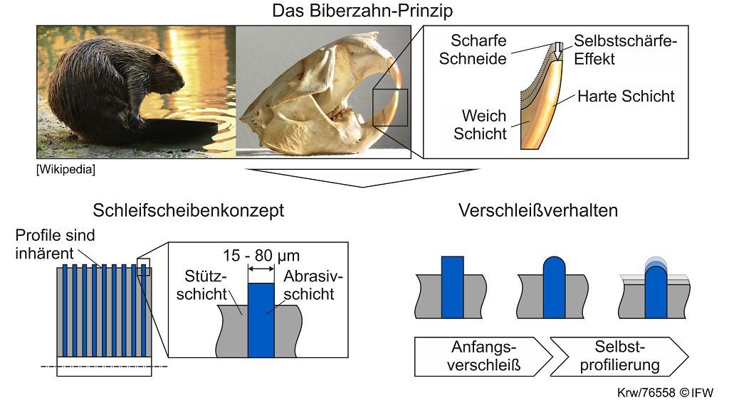 Abbildung 2: Das Biberzahn-Prinzip als Grundlage einer Schleifscheibe